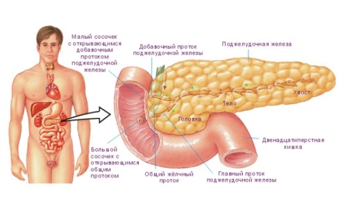 Схема поджелудочной железы